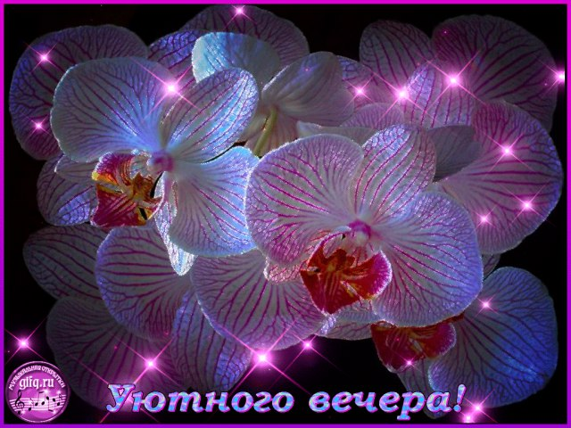 http://sg.uploads.ru/1THRQ.jpg