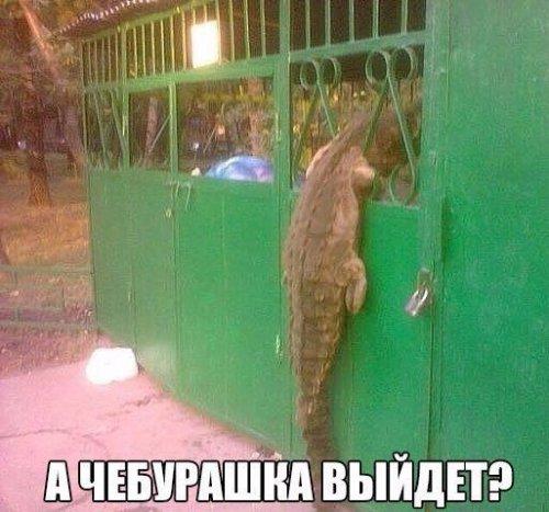 http://sg.uploads.ru/3m1Qz.jpg
