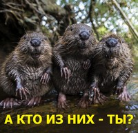 http://sg.uploads.ru/70QTH.jpg