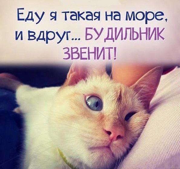 http://sg.uploads.ru/BJGSA.jpg