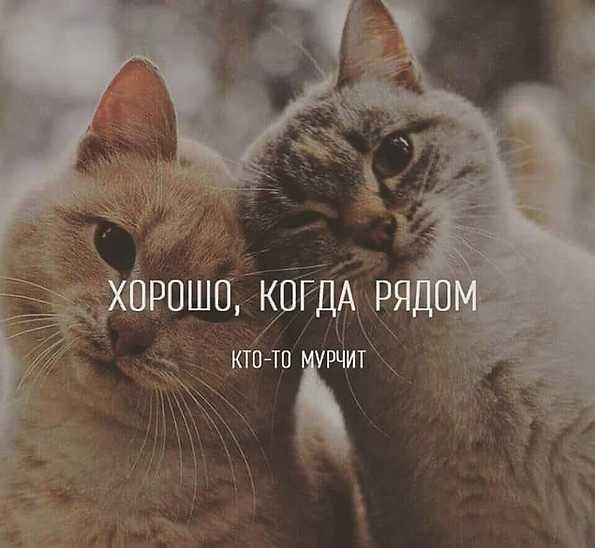 http://sg.uploads.ru/Br2pN.jpg