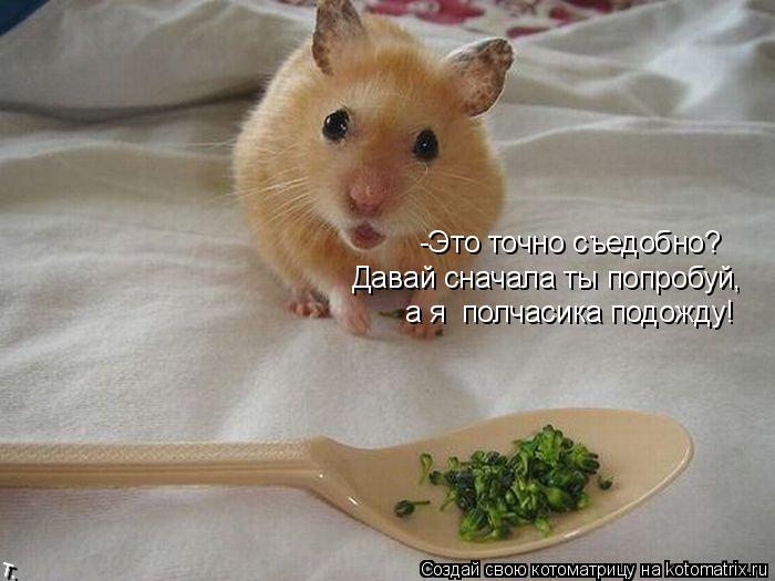 http://sg.uploads.ru/CDbAm.jpg