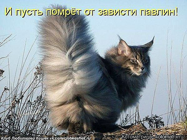http://sg.uploads.ru/I1WCJ.jpg
