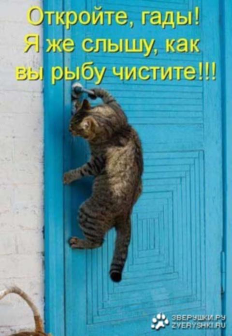 http://sg.uploads.ru/M5dCR.jpg