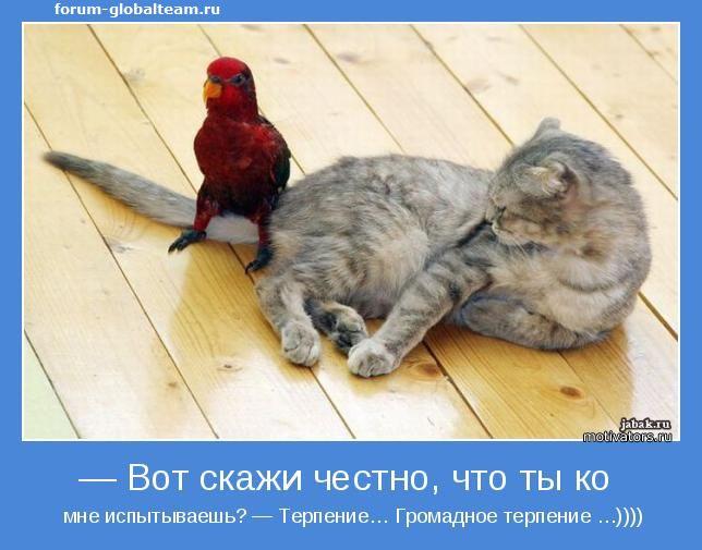 http://sg.uploads.ru/OQfyX.jpg