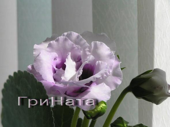 http://sg.uploads.ru/PCMow.jpg