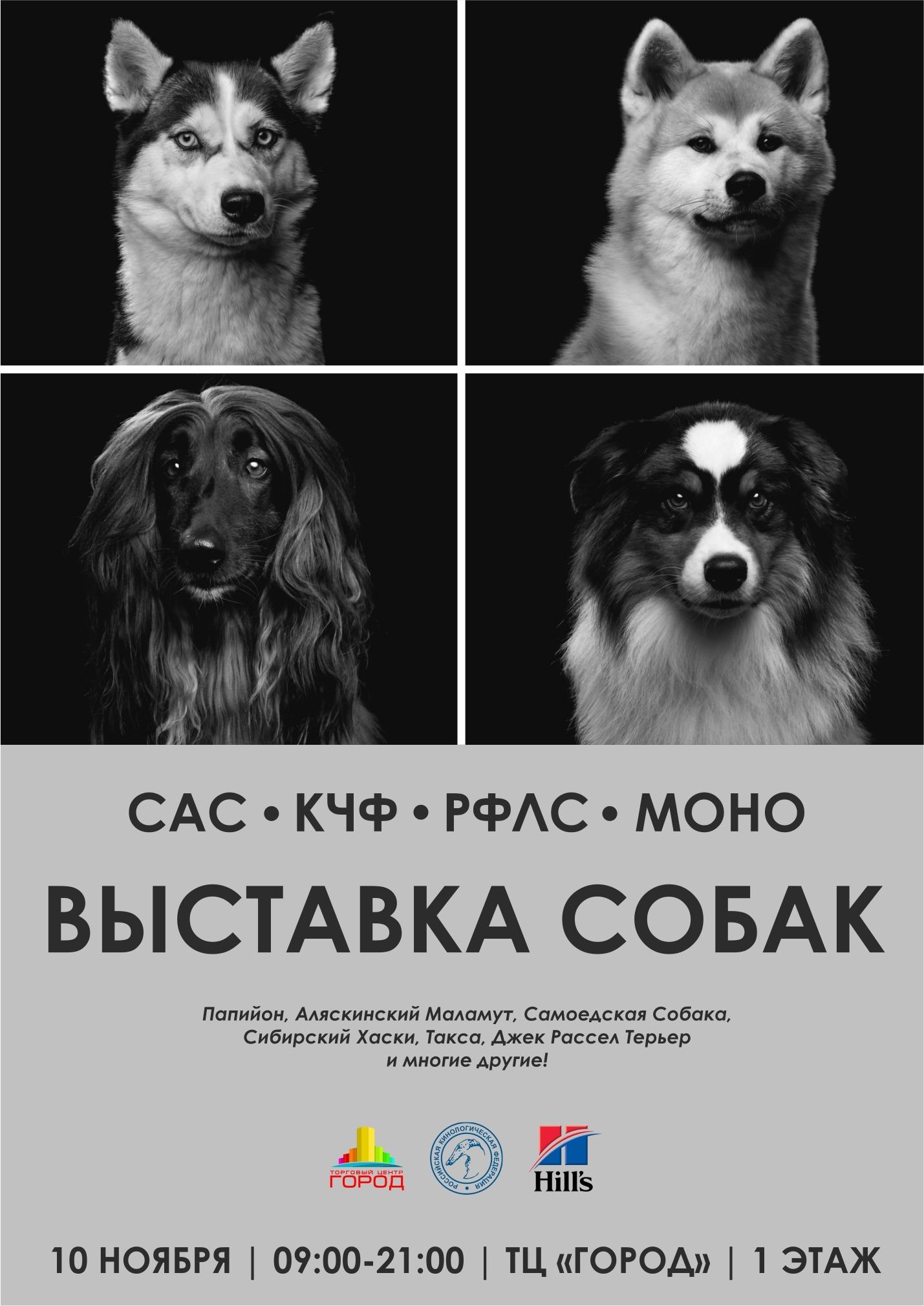 http://sg.uploads.ru/Pep2S.jpg