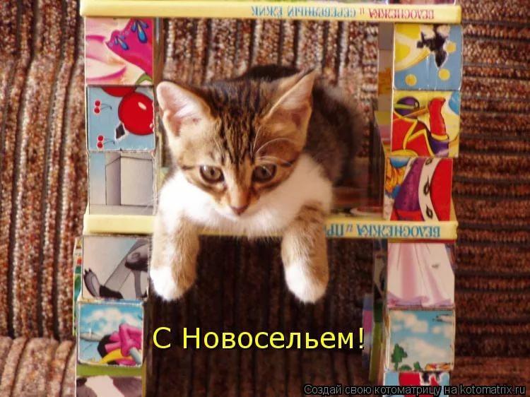 http://sg.uploads.ru/WUhC0.jpg