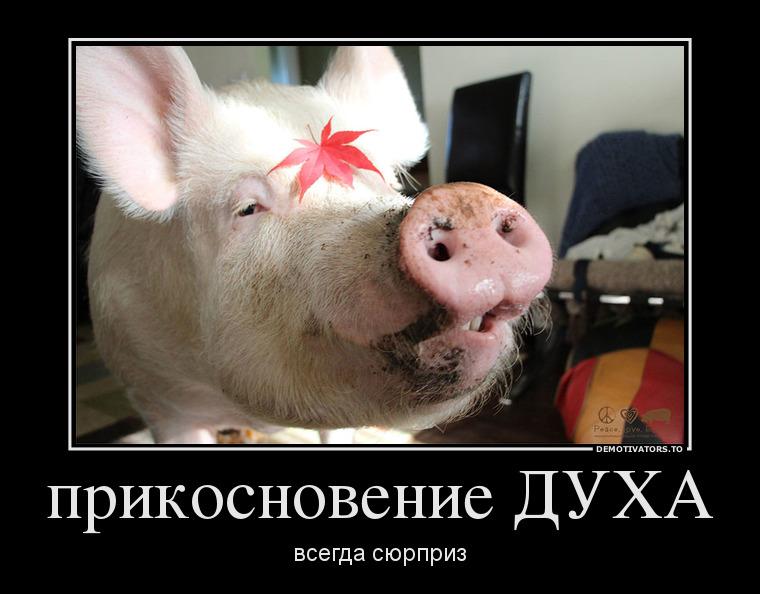 http://sg.uploads.ru/Zf2LI.jpg
