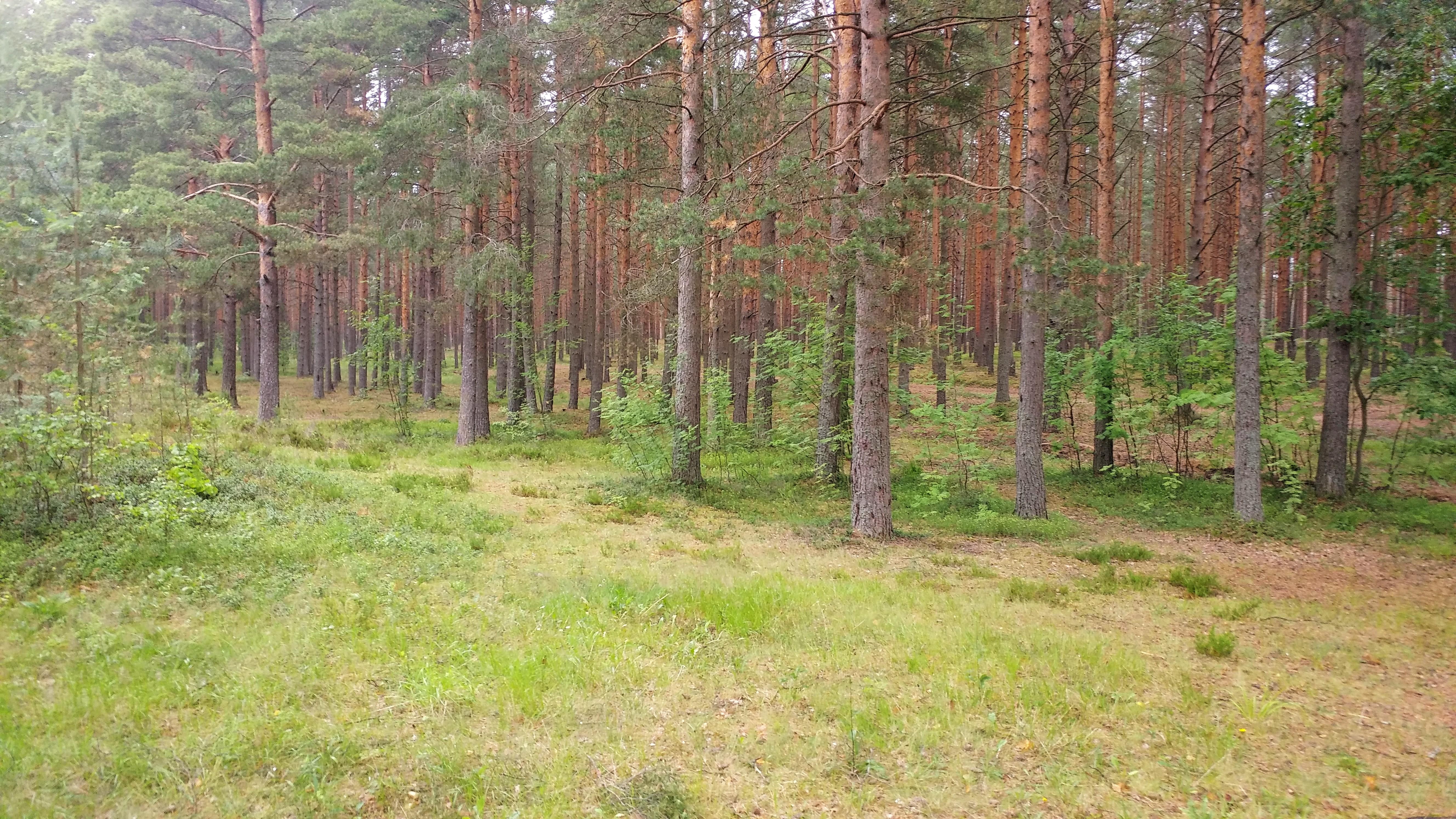 http://sg.uploads.ru/eyxow.jpg