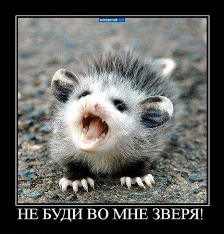http://sg.uploads.ru/gAyYf.jpg