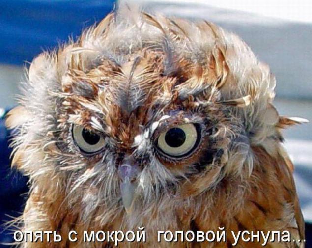 http://sg.uploads.ru/jURL9.jpg