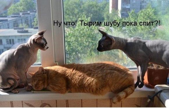 http://sg.uploads.ru/kw6dW.jpg