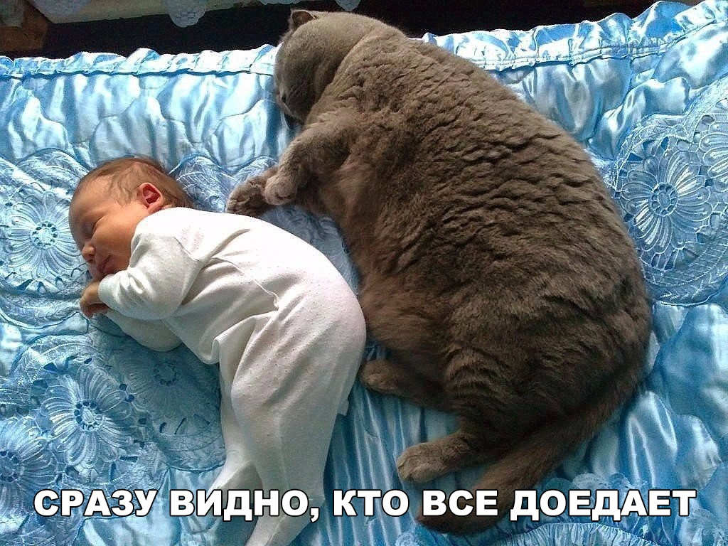 http://sg.uploads.ru/nB8xR.jpg