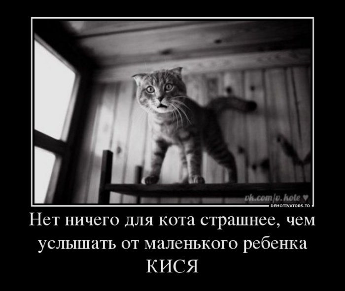 http://sg.uploads.ru/osN6R.jpg