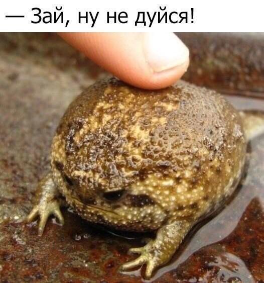 http://sg.uploads.ru/rUzvt.jpg