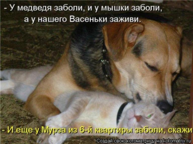 http://sg.uploads.ru/stJE7.jpg