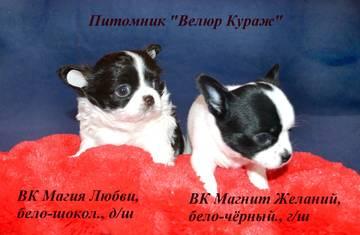 http://sg.uploads.ru/t/0Nwkf.jpg