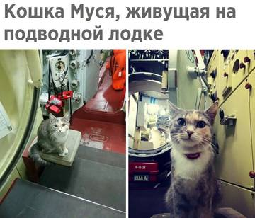 http://sg.uploads.ru/t/0pNEb.jpg