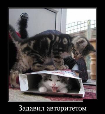 http://sg.uploads.ru/t/1Fyi7.jpg