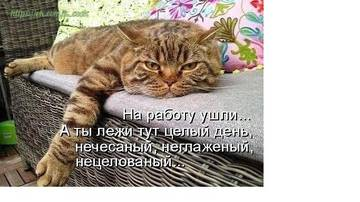 http://sg.uploads.ru/t/1blpm.jpg