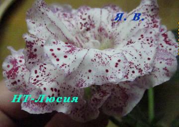 http://sg.uploads.ru/t/1qdPt.jpg