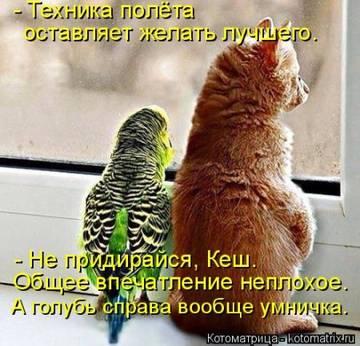 http://sg.uploads.ru/t/2JzSV.jpg