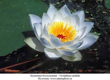 http://sg.uploads.ru/t/2mFul.jpg