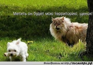 http://sg.uploads.ru/t/3O1Dm.jpg