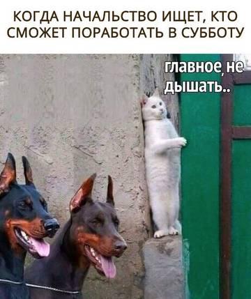 http://sg.uploads.ru/t/3PjmI.jpg