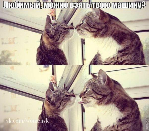 http://sg.uploads.ru/t/3thFU.jpg