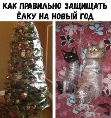 http://sg.uploads.ru/t/5AyLn.jpg