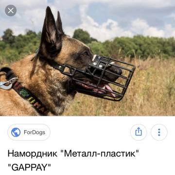 http://sg.uploads.ru/t/5DLj0.jpg