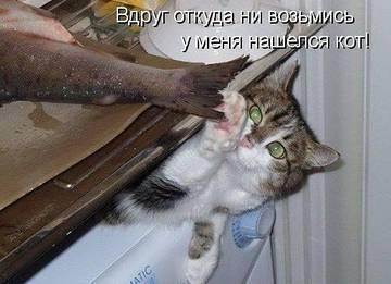 http://sg.uploads.ru/t/5OM3z.jpg
