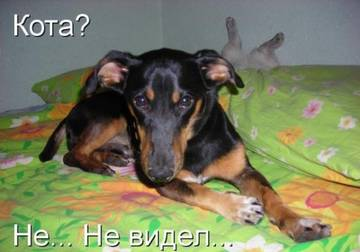 http://sg.uploads.ru/t/5YWEU.jpg