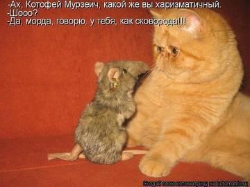 http://sg.uploads.ru/t/5pcTS.jpg
