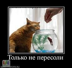 http://sg.uploads.ru/t/68Kc3.jpg