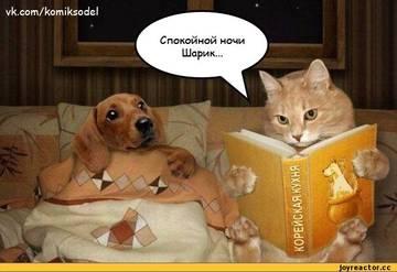 http://sg.uploads.ru/t/6bBEH.jpg