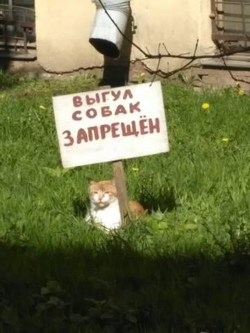 http://sg.uploads.ru/t/72vza.jpg