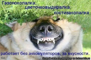 http://sg.uploads.ru/t/7O6Cb.jpg