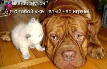 http://sg.uploads.ru/t/7VM1g.jpg