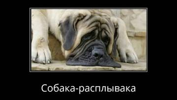 http://sg.uploads.ru/t/82RO9.jpg