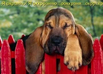 http://sg.uploads.ru/t/8Yz3J.jpg