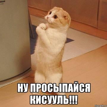 http://sg.uploads.ru/t/8ivpF.jpg