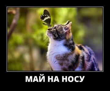 http://sg.uploads.ru/t/8kRJy.jpg