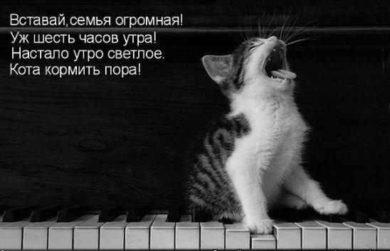 http://sg.uploads.ru/t/9xNzW.jpg