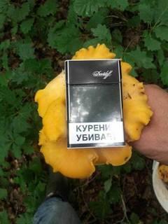 http://sg.uploads.ru/t/AnGuU.jpg
