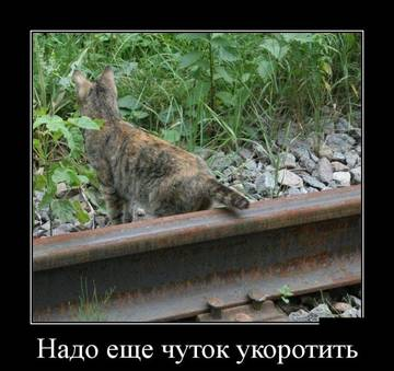 http://sg.uploads.ru/t/B5RiL.jpg
