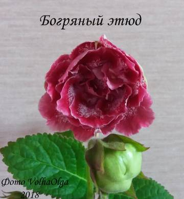 http://sg.uploads.ru/t/BMa8Z.jpg