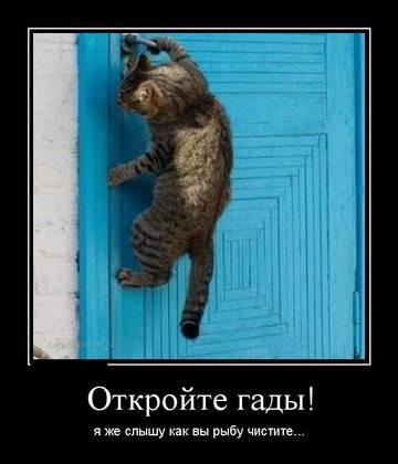 http://sg.uploads.ru/t/BSZ69.jpg